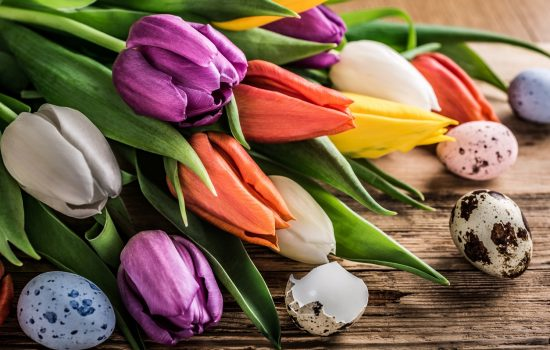 Colorful tulips with quail eggs on old wooden background. Spring and Easter concept with copy space. Retro style toned.